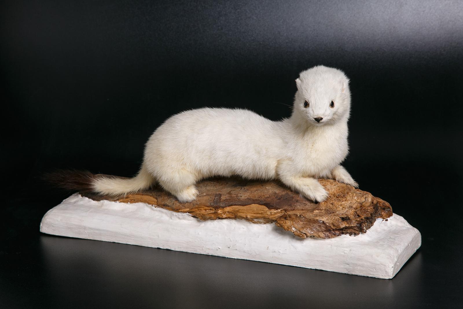 Выставка «Чёрное/Белое: парадоксальные цвета» – события на сайте «Московские Сезоны»