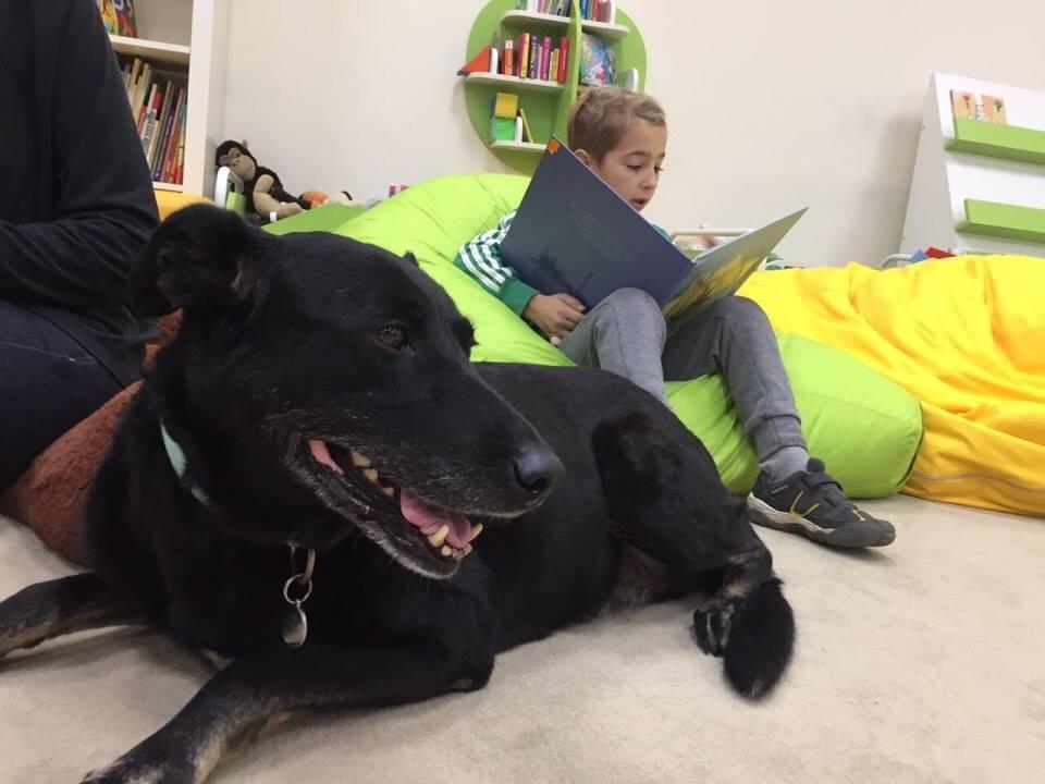 Встреча с собакой-терапевтом «Читаем вместе» – события на сайте «Московские Сезоны»