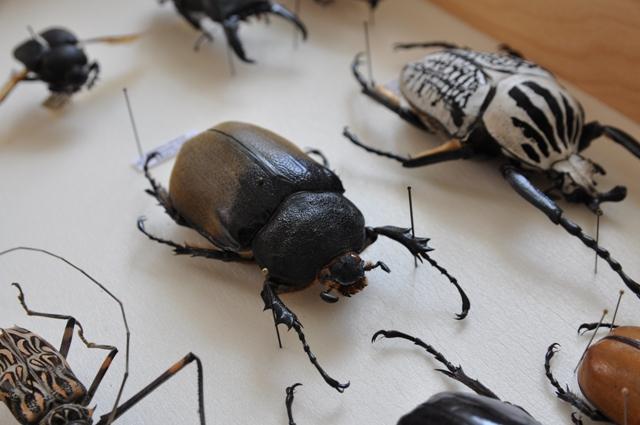 Ночь музеев в Зоологическом музее МГУ – события на сайте «Московские Сезоны»