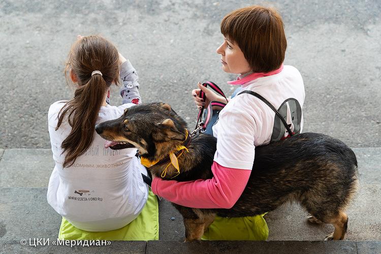 Выставка бездомных животных «Summer Хвостофест» – события на сайте «Московские Сезоны»