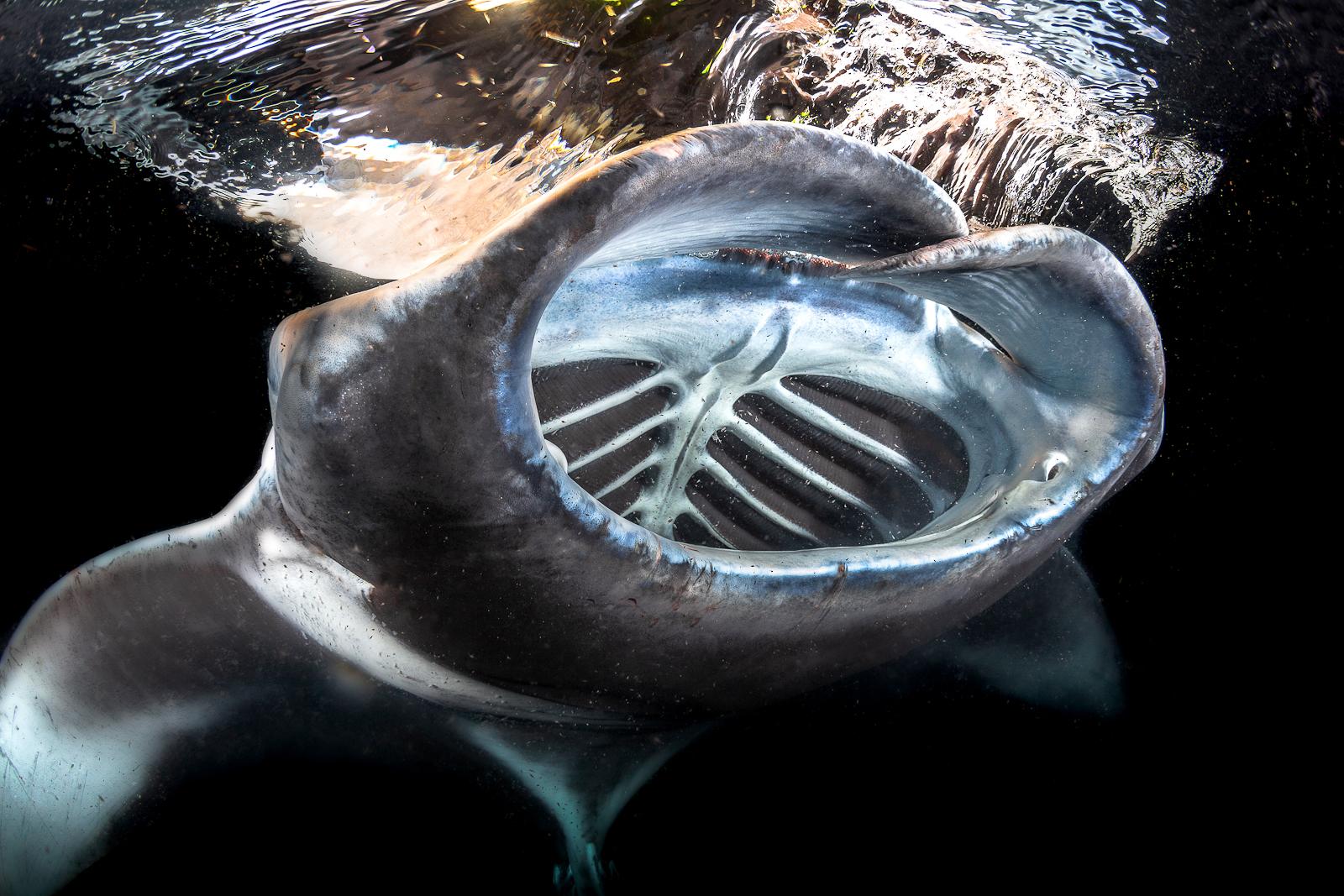 IV Фестиваль подводной фотографии «Дикий подводный мир» – события на сайте «Московские Сезоны»