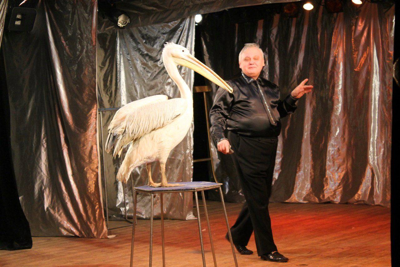 Представление «Новогоднее шоу птиц» – события на сайте «Московские Сезоны»