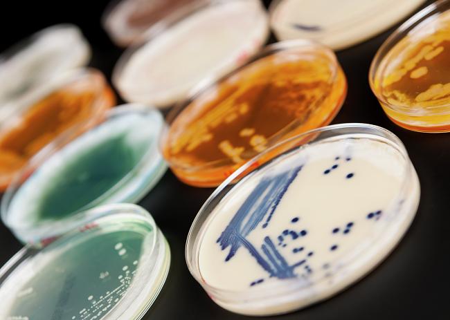 Интерактивное занятие «Микромонстры: бактерии и вирусы» – события на сайте «Московские Сезоны»