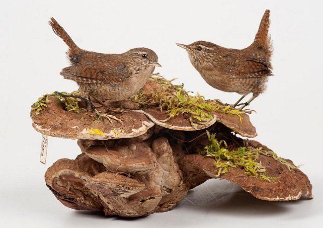 Праздник к Международному дню птиц «Пернатый выходной» – события на сайте «Московские Сезоны»