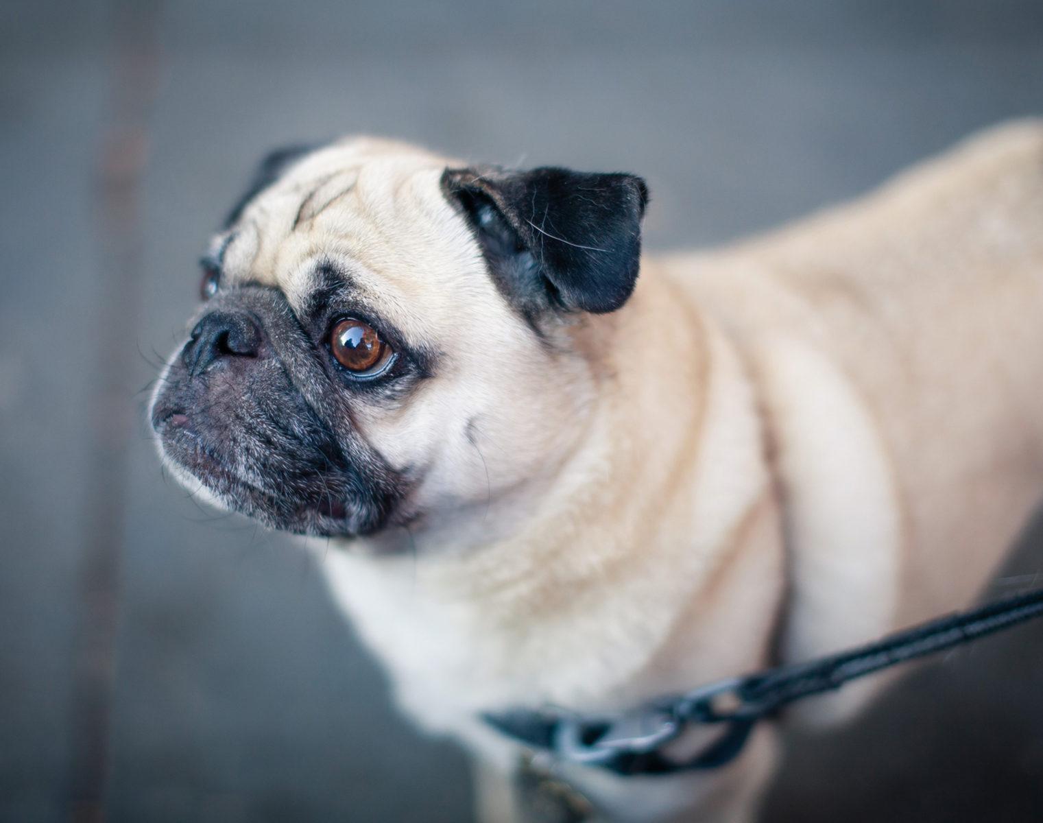 Вакцинация домашних животных против бешенства в Южном Тушине – события на сайте «Московские Сезоны»
