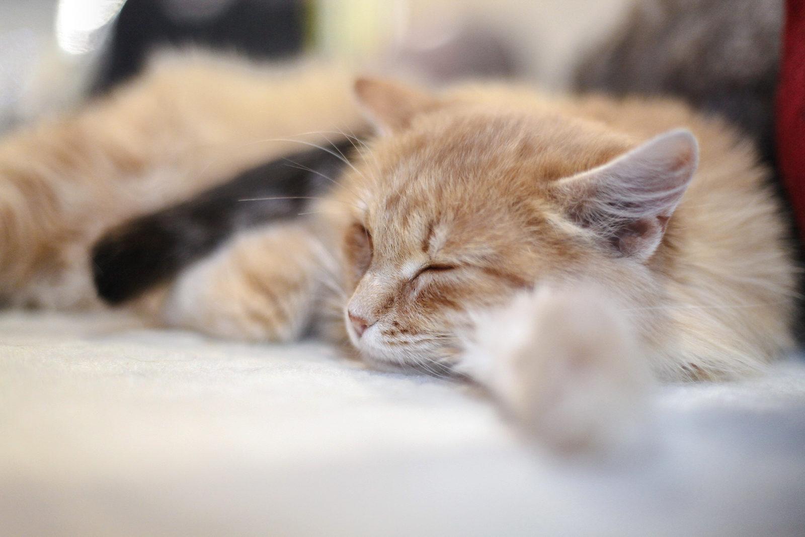Вакцинация домашних животных против бешенства в Матушкине – события на сайте «Московские Сезоны»