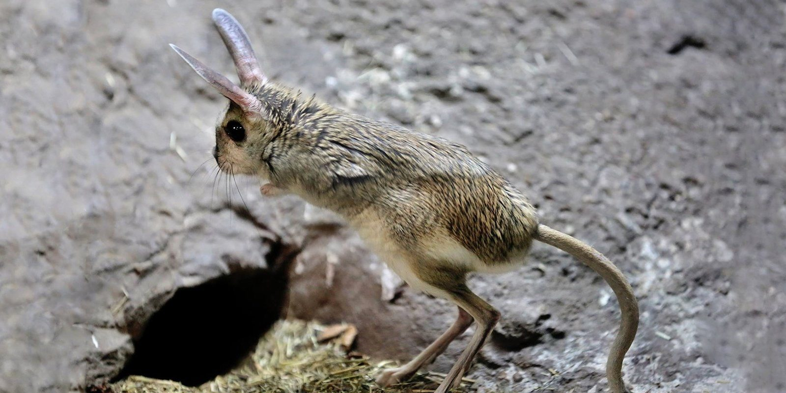 莫斯科动物园跳鼠苏醒迎春 | 活动资讯 | Moscow Seasons