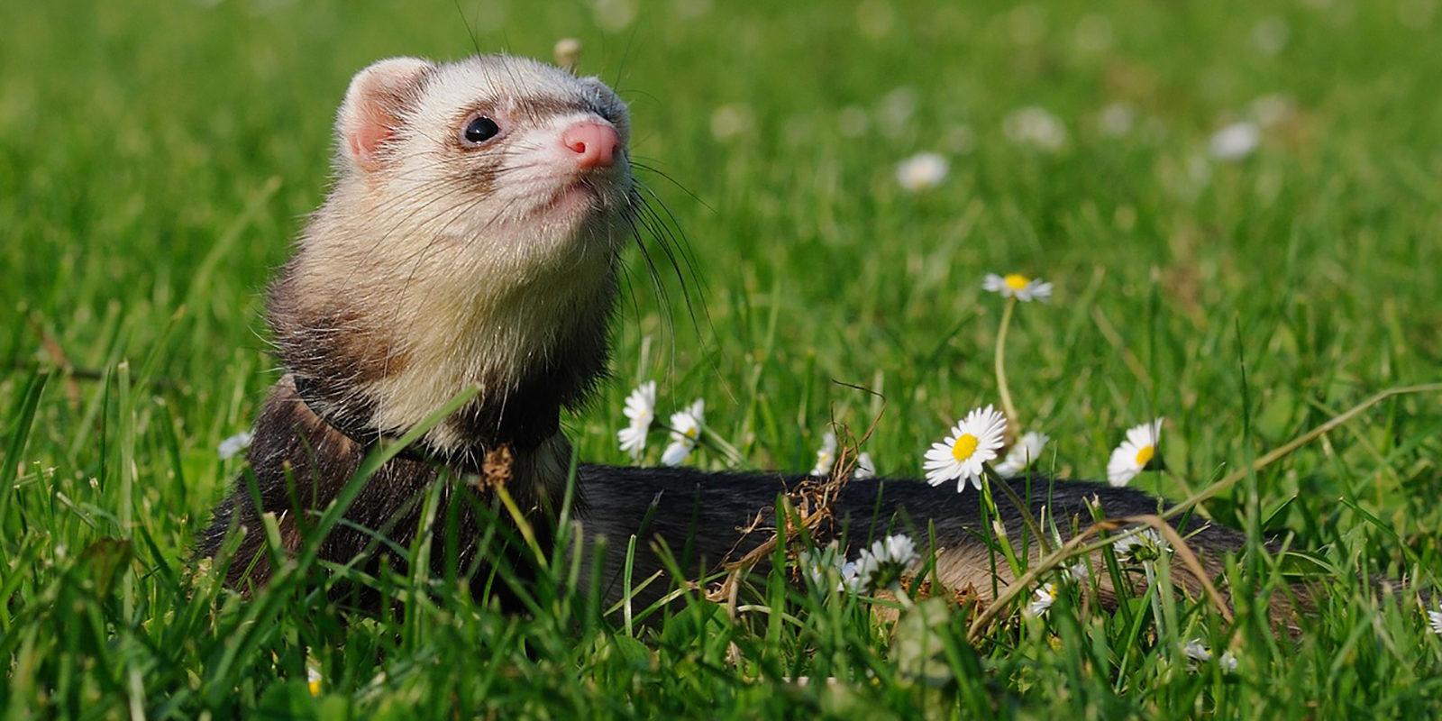 Вакцинация домашних животных против бешенства в Орехово-Борисове Северном – события на сайте «Московские Сезоны»