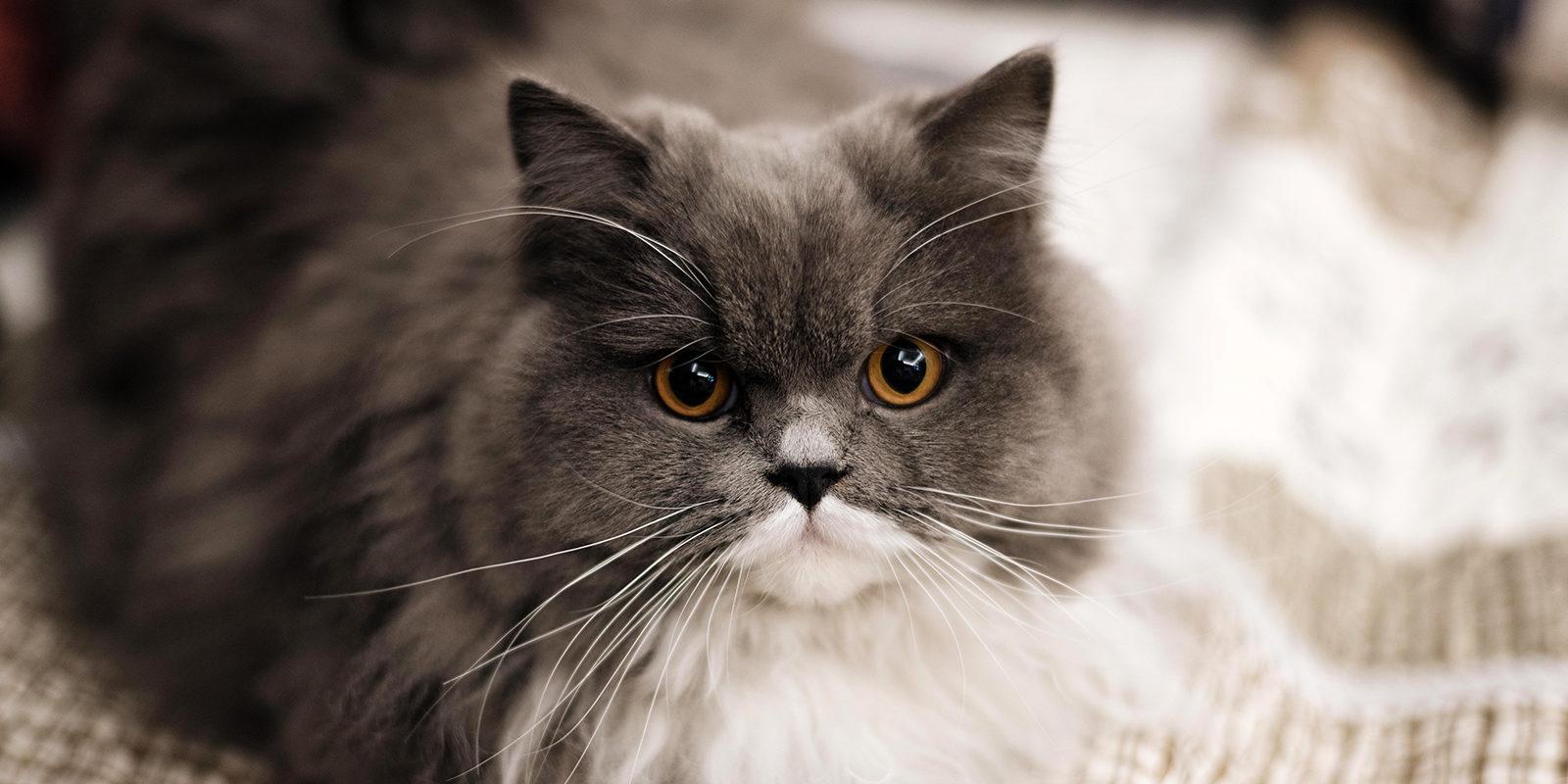Вакцинация домашних животных против бешенства в Якиманке – события на сайте «Московские Сезоны»