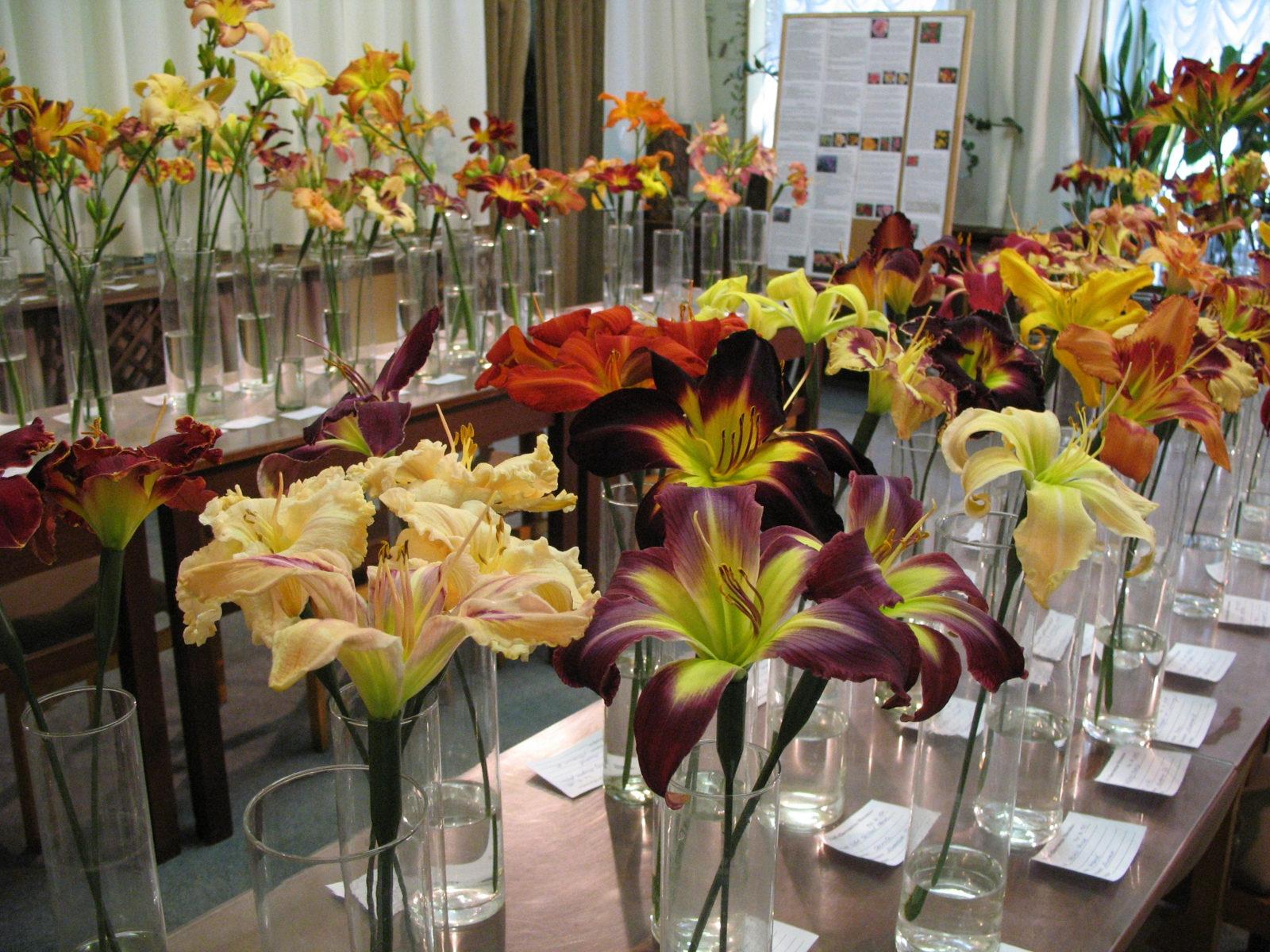 Цветочная выставка «Лилейники» в Биологическом  музее – события на сайте «Московские Сезоны»