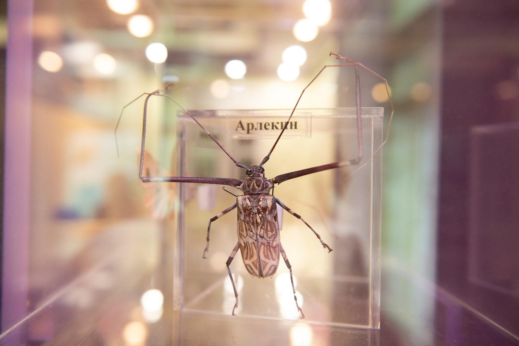 Праздничная программа «БукашкиФест» в Биологическом музее – события на сайте «Московские Сезоны»