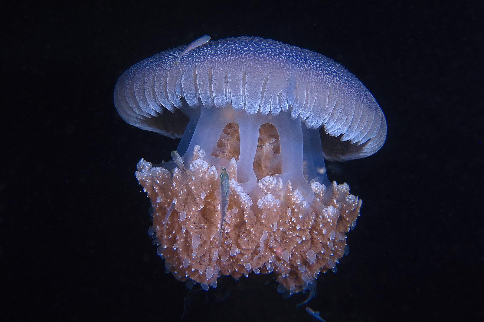 Фестиваль «Дикий подводный мир» в Дарвиновском музее – события на сайте «Московские Сезоны»