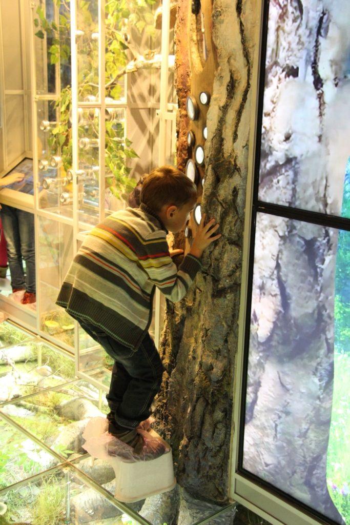 Программа «5 лет интерактивному образовательному центру «Познай себя – познай мир» в Дарвиновском музее – события на сайте «Московские Сезоны»
