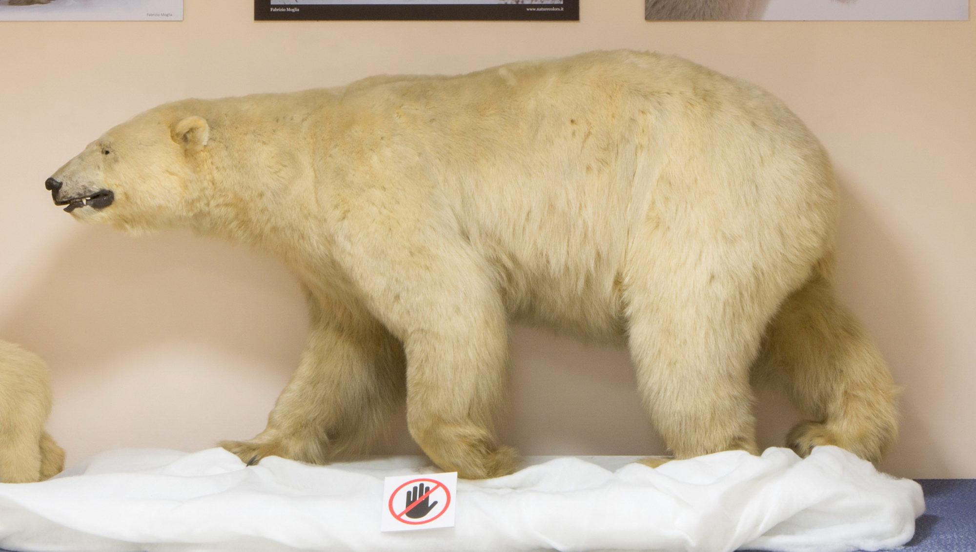 Выставка «Жизнь среди снега и льда» в Дарвиновском музее – события на сайте «Московские Сезоны»