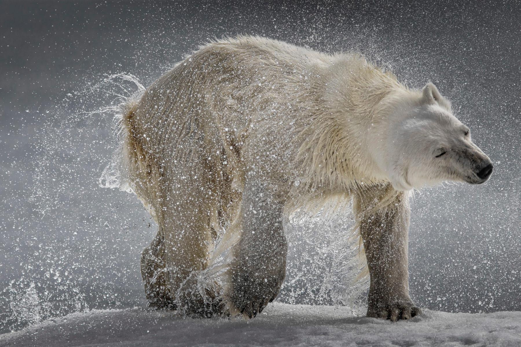 Фотовыставка «Песнь холода» в Дарвиновском музее – события на сайте «Московские Сезоны»