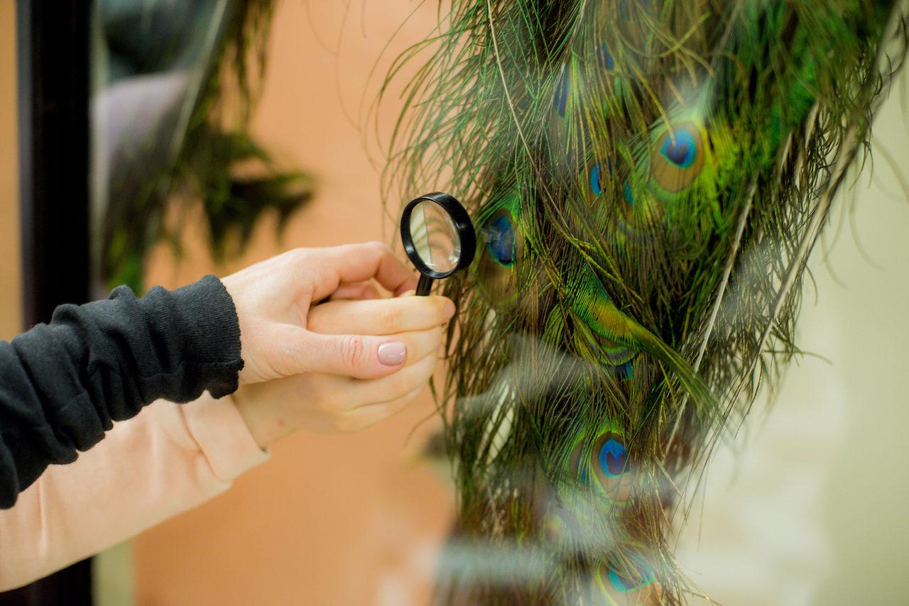 Виртуальная экскурсия «Цвет в природе» – события на сайте «Московские Сезоны»