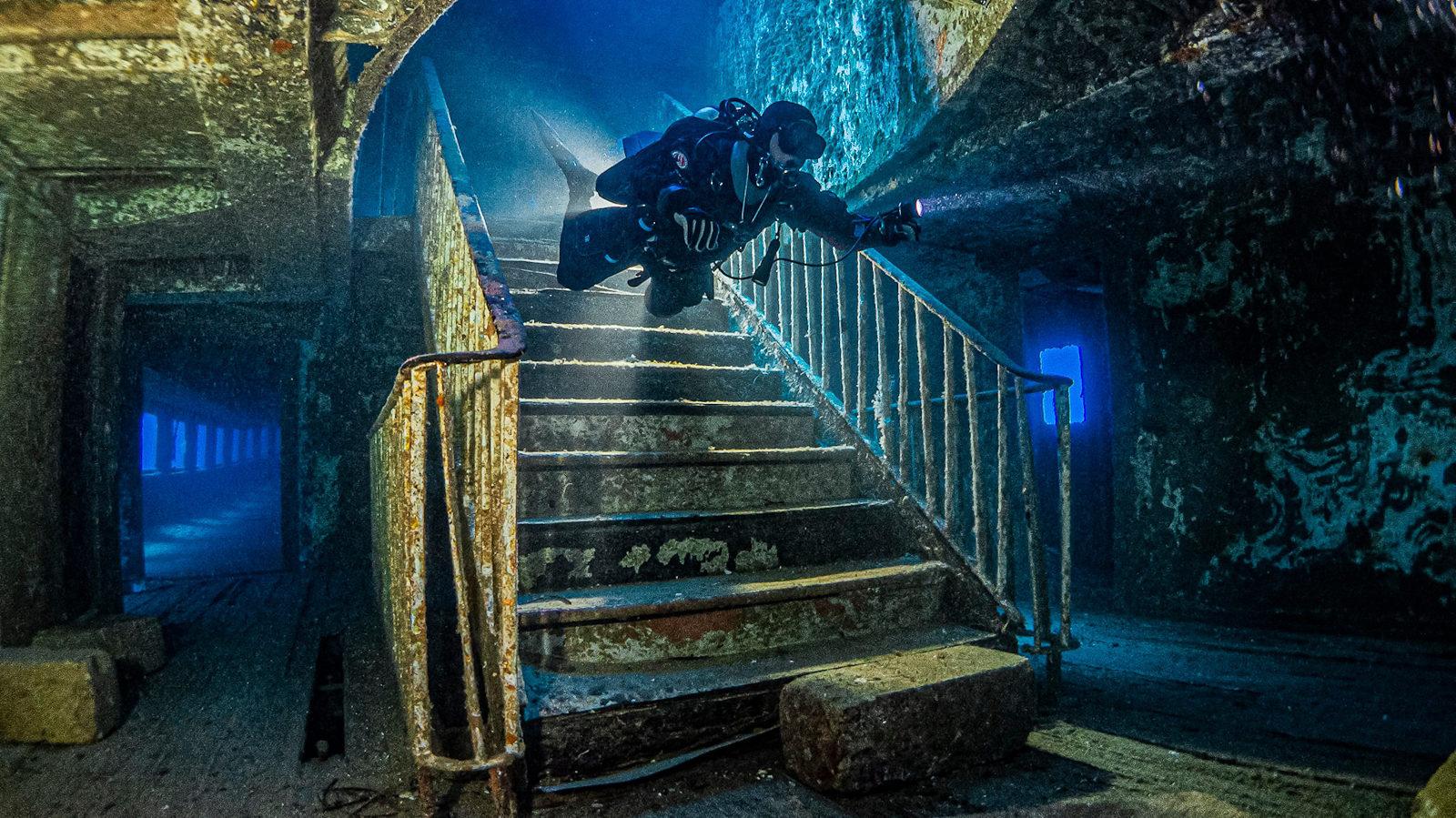 Выставка «Дикий подводный мир» в Дарвиновском музее – события на сайте «Московские Сезоны»