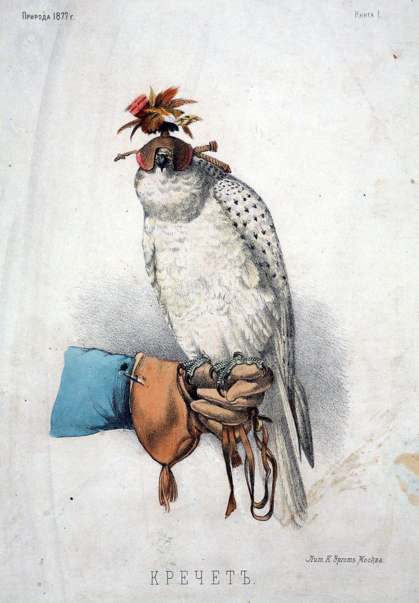 Выставка «Соколиная охота. Царская потеха с ловчими птицами» в музее-усадьбе «Измайлово» – события на сайте «Московские Сезоны»